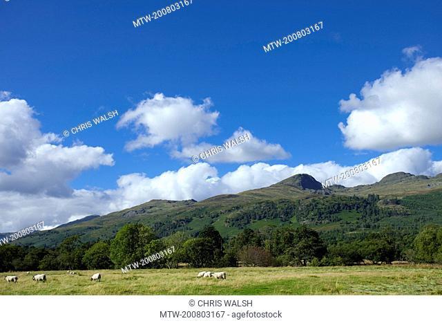 Highland landscape Scotland hills summer sheep
