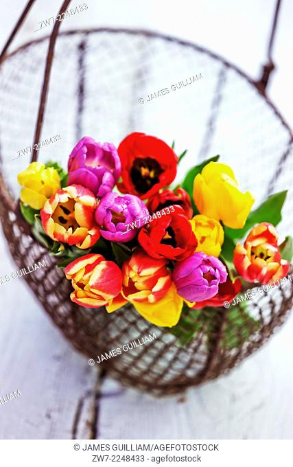 Wire basket with rainbow Tulip bouquet