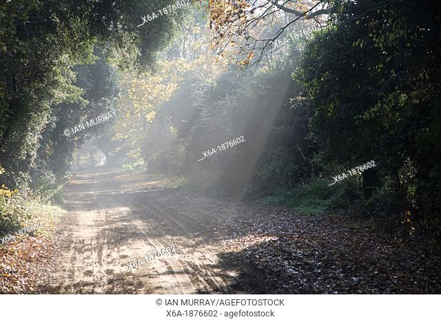 Rays of sunlight shine on rural track, Sutton, Suffolk, England