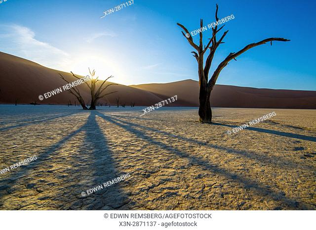 Sunlight bursting through the branches of a dead acacia tree trunk in the Soussuvlei salt pan in Namib-Naukluft National Park, located in Namibia, Africa