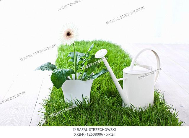 potted flower and watering can