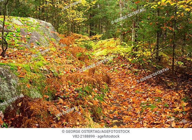 Yondota Falls Trail, Presque Isle Wild and Scenic River, Ottawa National Forest, Michigan