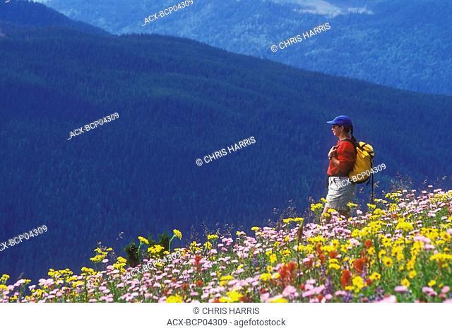 Hiking amidst alpine flowers, Sun Peaks, Shuswap region, British Columbia, Canada