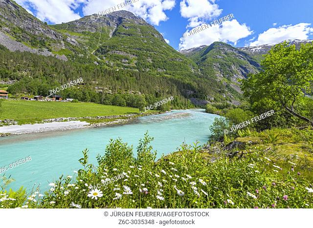wild flowers at the riverbank, Norway, landscape of Jostedalen with mountains and marguerites, Jostedalsbreen National Park