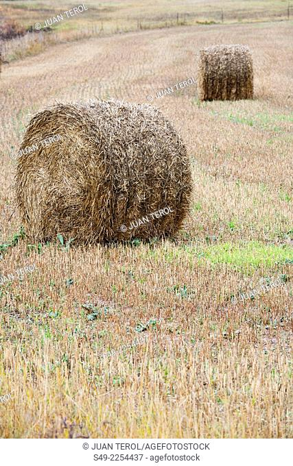 Straw bales, Teruel province, Aragon, Spain