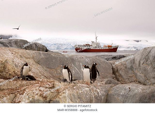 Antarctica, Antarctic Peninsula, Lemaire Channel, Petermann Island, Antarctica Dream ship and Gentoo Penguins