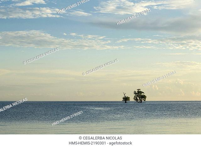 Indonesia, Lesser Sunda Islands, Alor Island, Deere Beach, Mangrove trees in the middle of the water