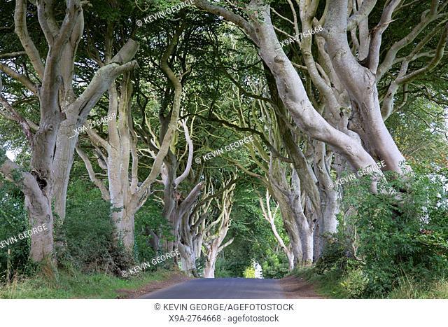 Dark Hedges, County Antrim, Northern Ireland, UK