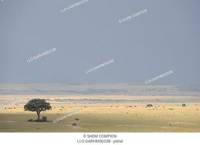 Migration of animals before a storm, Masai Mara Game Reserve, Kenya