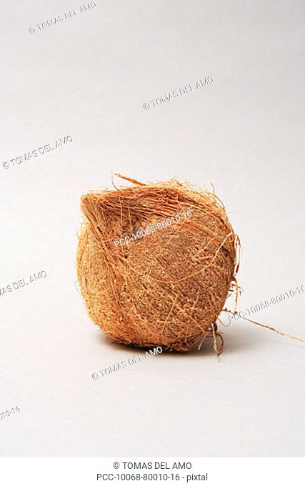 Hairy coconut alone on white background