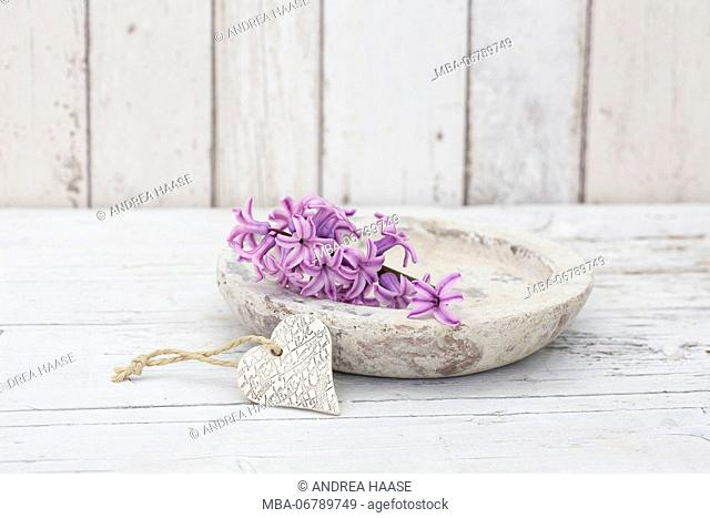 Hyacinth flowers in stone bowl, close up, still life
