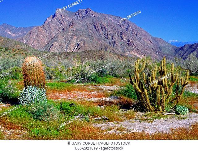 Anza-Borrego Desert State Park CA