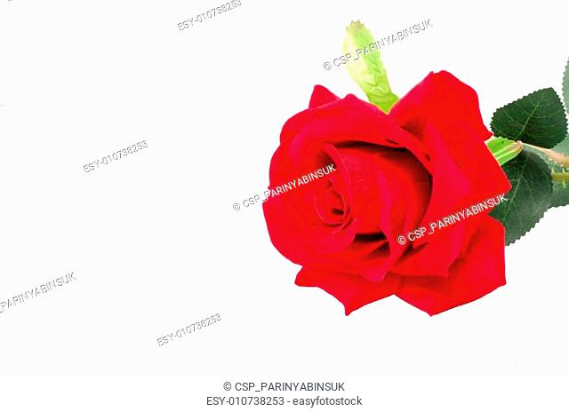 Artificial red rose isolated on white background