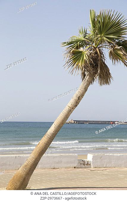 Beach with palm in Barbate in, Cadiz province, Andalusia, Spain