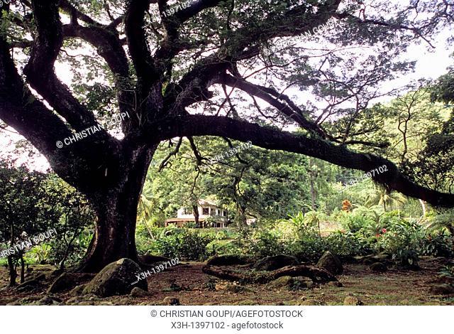jardin de l'habitation Ceron Ile de la Martinique Departement et Region d'Outremer francais Archipel des Antilles Caraibes//Habitation Ceron's garden Martinique...