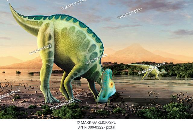 Corythosaurus is a genus of hadrosaurid (i.e. 'duck-billed') dinosaurs, planet eaters, that lived in what is now North America towards the end of the Cretaceous...