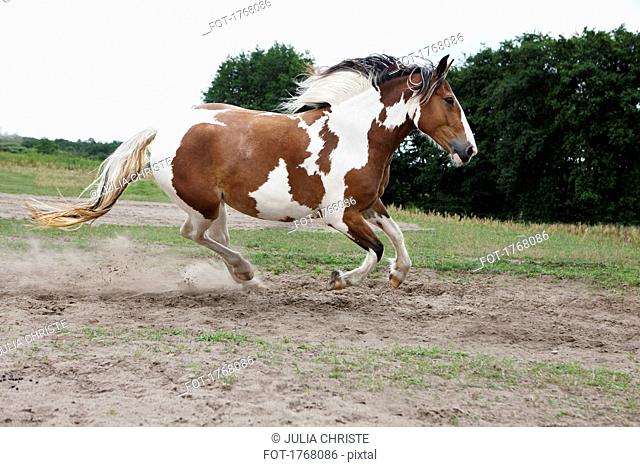 Brown and white horse running in rural field