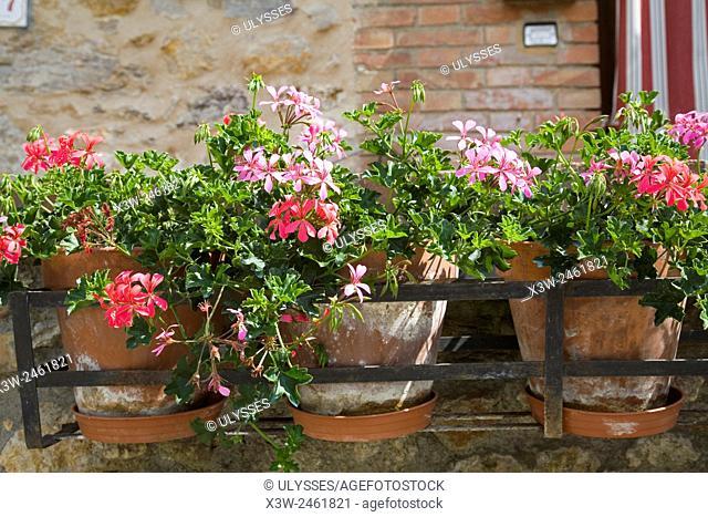 europe, italy, tuscany, casal di pari, flowers