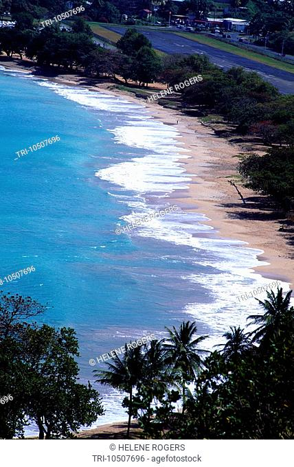 Castries St Lucia Bay with Palm Trees