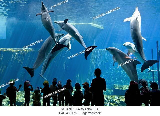 Children look at dolphins at the Doplhinarium at the zoo in Nuremberg, Germany, 22 May 2014. Photo: Daniel Karmann/dpa   usage worldwide