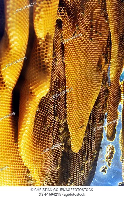 hive, La Miellerie, Beurrieres, Livradois-Forez Regional Nature Park, Puy-de Dome department, Auvergne region, France, Europe