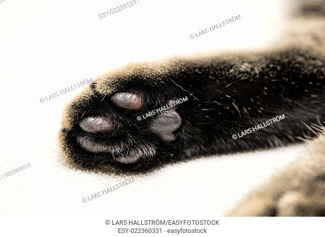 Close-up of cats paw