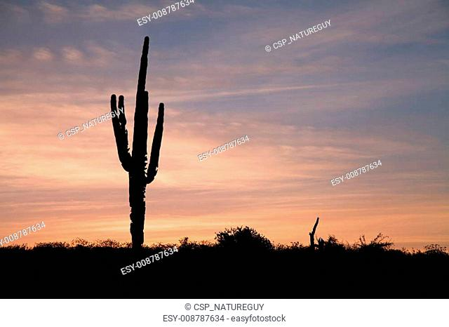 Sunrise Saguaro