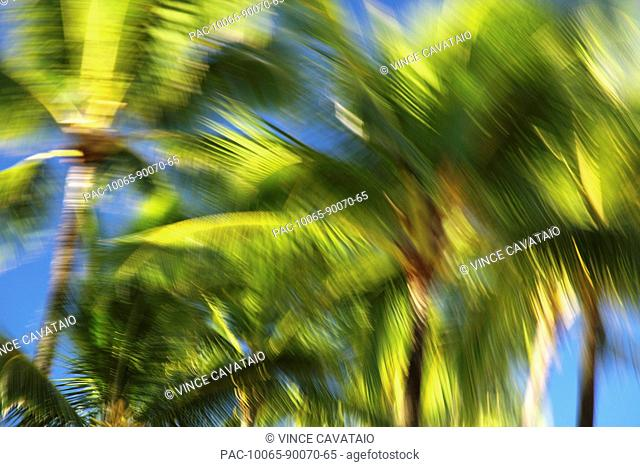 Hawaii, Oahu, Abstract image of blurred palm trees