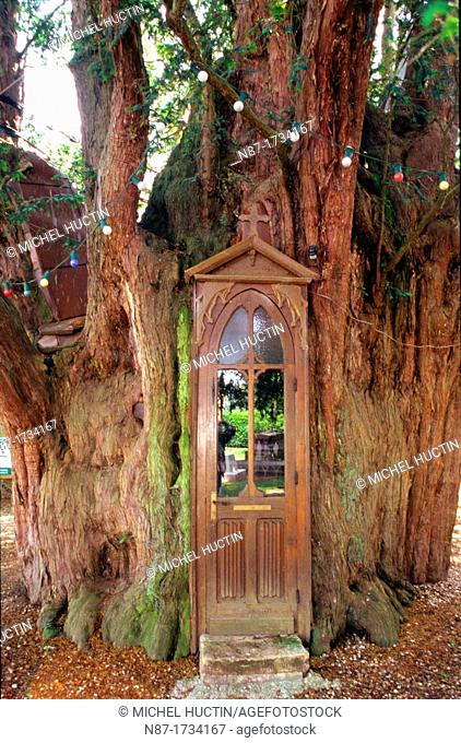There is a small chapel with an altar in a Yew tree in ' La Haye de routot' in Normandy