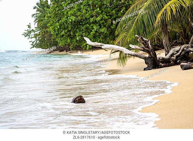 Beautiful beaches on the island of red Frog Beach resort in Bocas del Toro