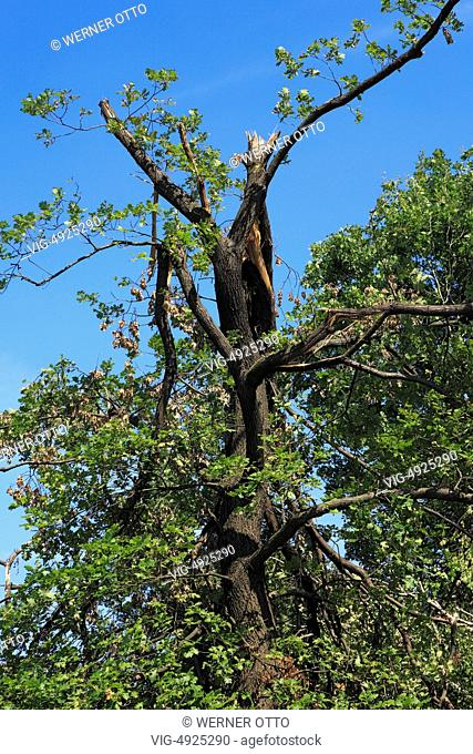 storm damages by depression -Ela- on June 9, 2014 an June 10, 2014, desolations and tree desolations in a forest in D-Herten, Ruhr area, Westphalia