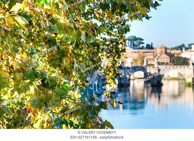 travel to Italy - branch of sycamore tree and Tiber River with Holy Angel Bridge in Rome in autumn