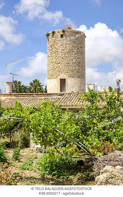 Torre des Moli, Ses Salines, Mallorca, balearic islands, Spain