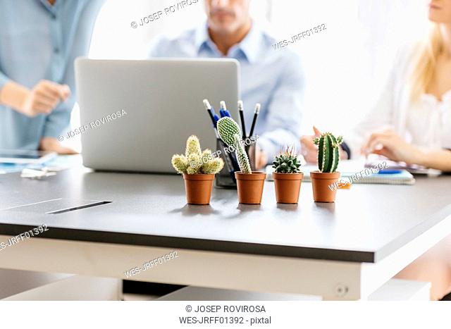Cactusses on desk with business people working in background