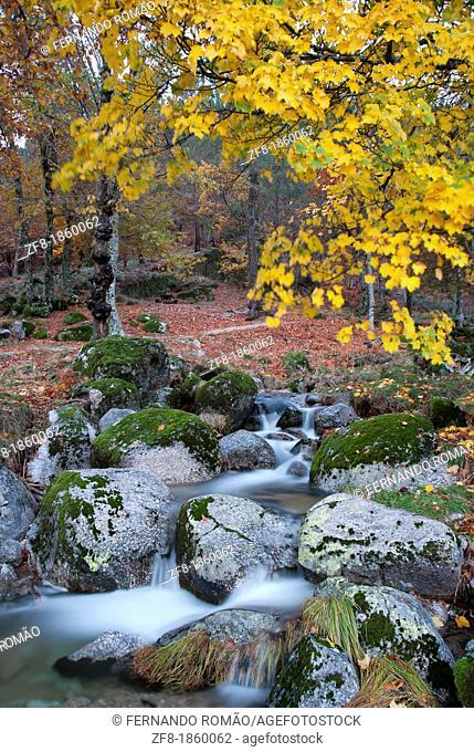 Stream at Estrela Mountain Natural Park, Portugal