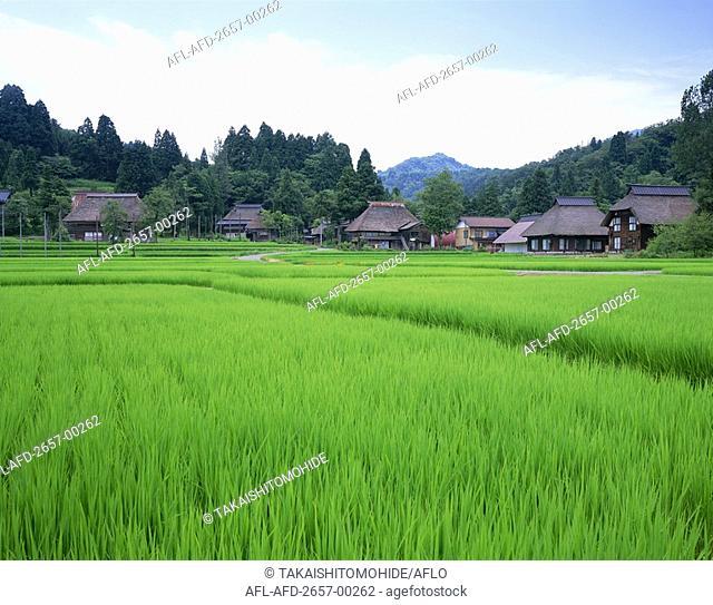 Ogino Island, Niigata Prefecture