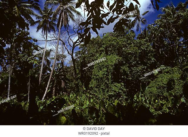 Inside coastal rain forest with palms, Yap, Western Pacific Ocean Island