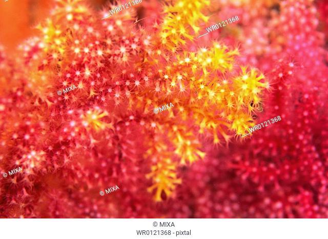 Close up of coral, Okinawa, Japan