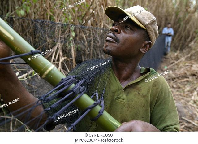 RESEARCHER FRONT AND ORNITHOLOGIST PIERFRANCESCO MICHELONI, ERECTING MIST NET TO COLLECT MIGRATING BARN SWALLOWS FOR BANDING, EBAKKEN, NIGERIA