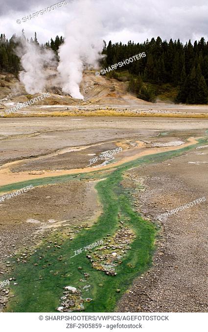 Norris Geyser Basin, Yellowstone National Park, Wyoming, USA