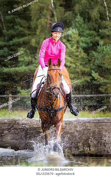 Holsteiner Horse. Rider on bay gelding clearing an obstacle during a cross-country ride. Germany