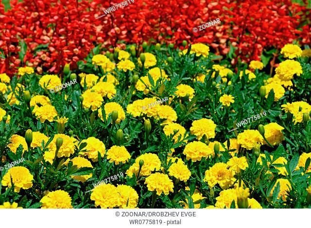 Multicolored flower field