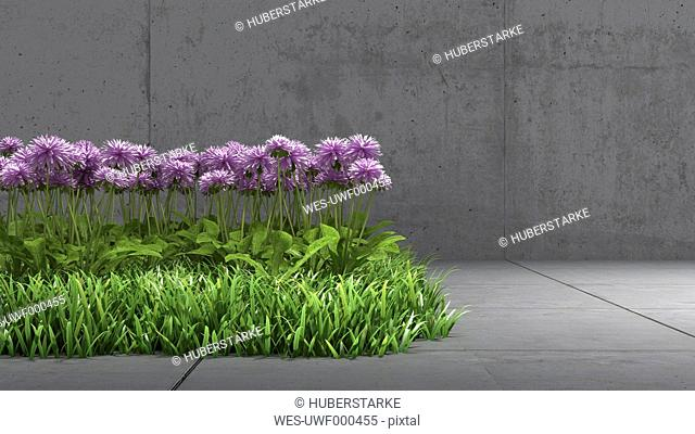 Meadow with purple blossoms in between concrete surrounding, 3D Rendering