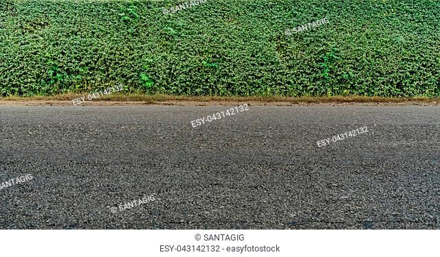 Green hedge fence and asphalt road