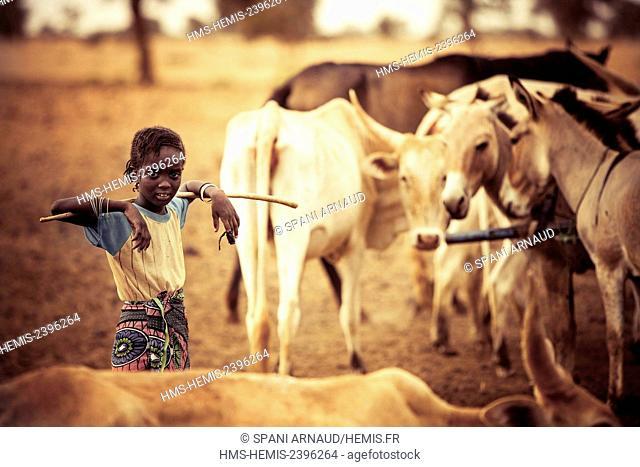 Senegal, Sahel, Ferlo region, Widou Thiengoly, Young cattle keeper