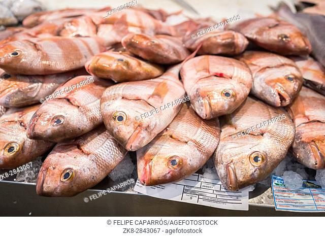 Freshly caught fish at the fish market in Cadiz, Andalucia, Spain
