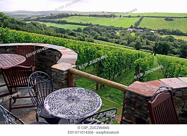 Wine vineyard with furniture