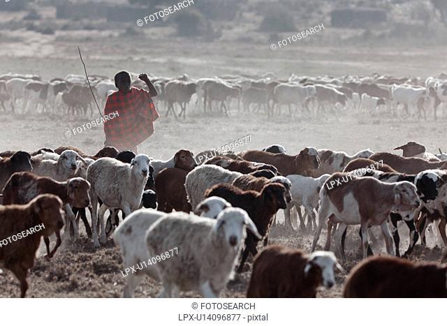 Masai Mara, African, Masai, Maasai, Kenya, Nilote, Africa