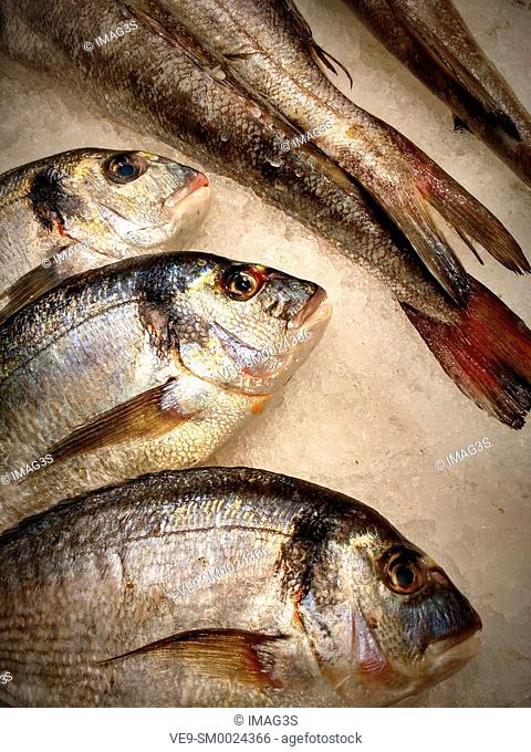 Gilt-head bream ready to be sold in a fishmarket