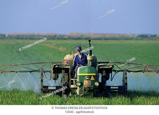 Spraying rice fields with insecticide. Ebro Delta. Tarragona province. Spain